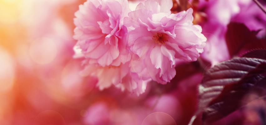 L'utilisation des plantes et le zodiaque à des fins thérapeutiques