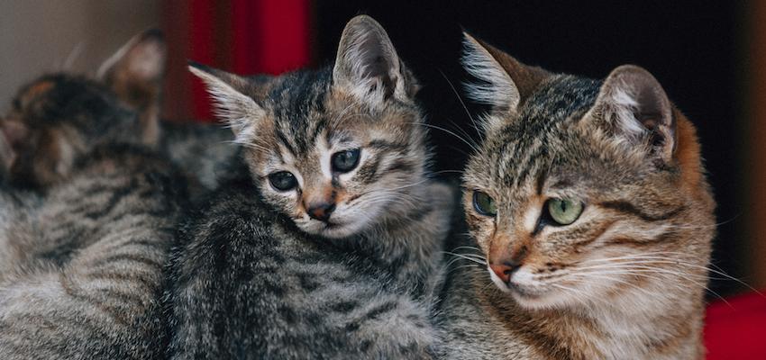 Quelle est la mission des chats dans notre vie ?