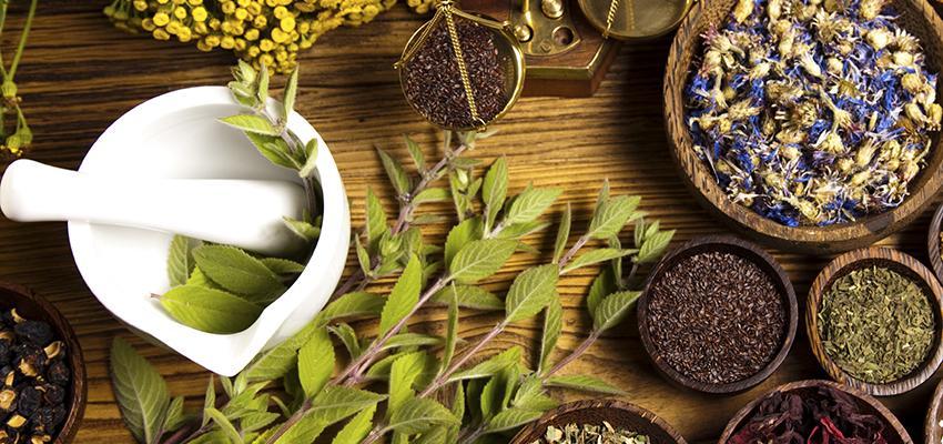 Phytothérapie : les dangers des plantes médicinales