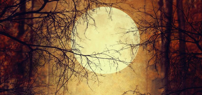 L'effet de la pleine lune sur les gens et les animaux
