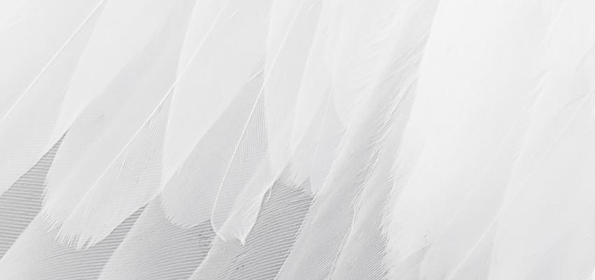 Pourquoi et comment provoquer la visite d'un ange gardien ?