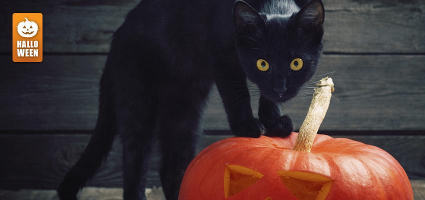 Pourquoi le chat noir est un symbole de l'Halloween