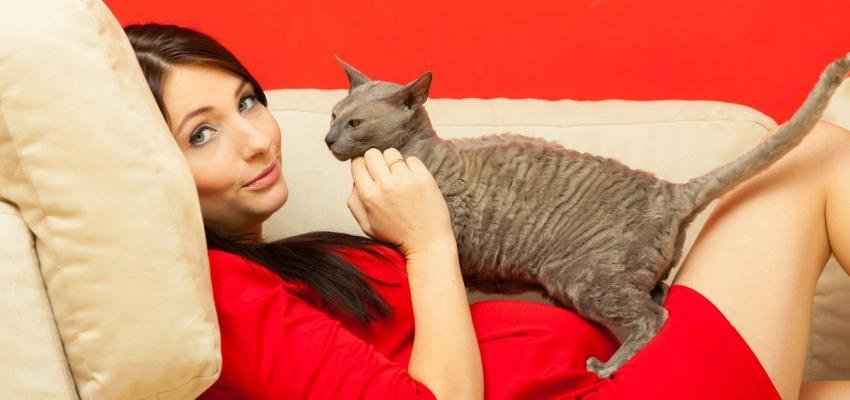 Les chats sont les gardiens de l'humanité