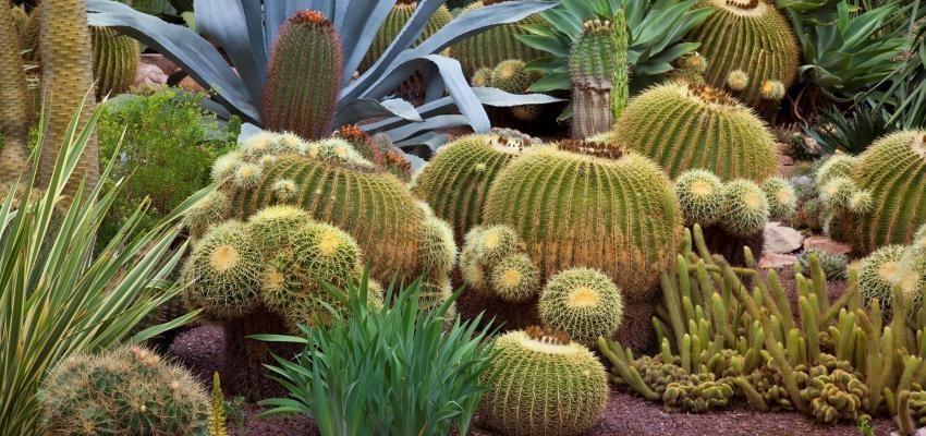 Profitez de la protection et la sécurité du cactus dans votre maison !