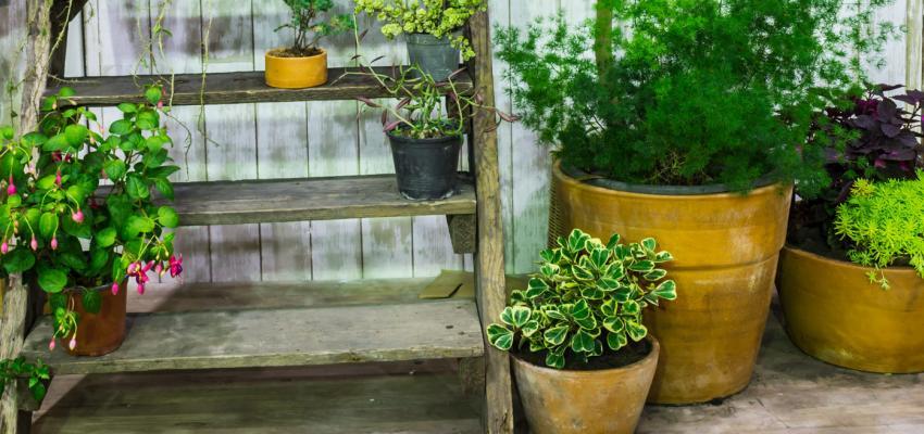 Découvrez 5 plantes pour la purification de l'air de votre maison