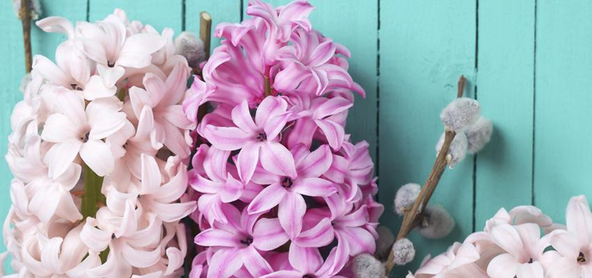 Signification et énergie : les fleurs en Feng Shui