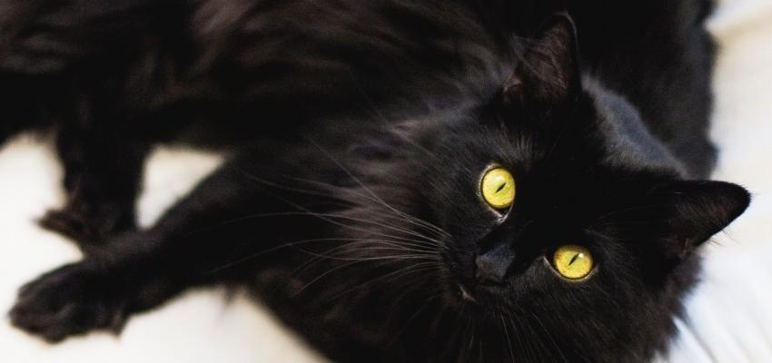 La superstition du chat noir – Est-ce un mythe ou une réalité ?