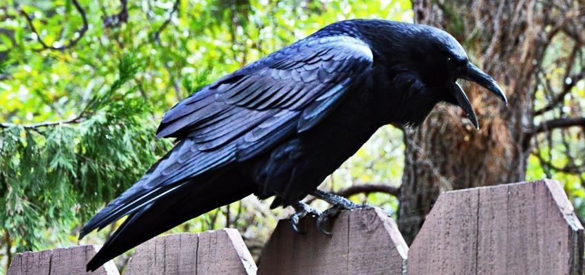 Les superstitions qui annoncent la mort