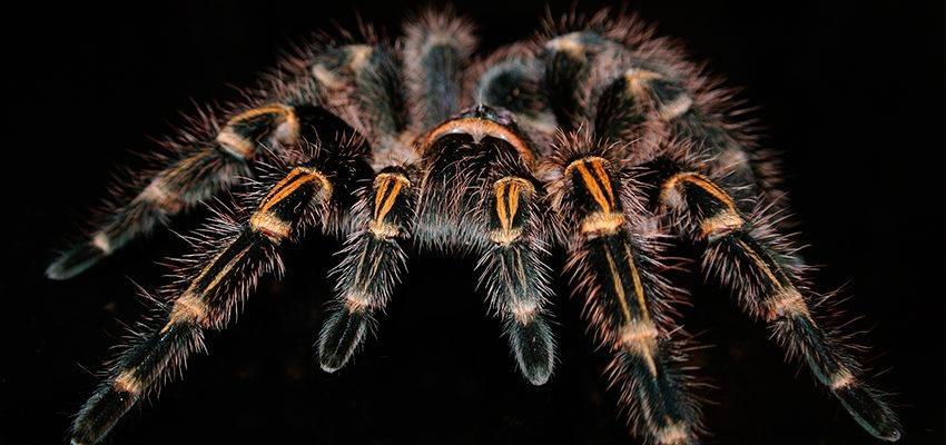 Superstitions concernant les araignées