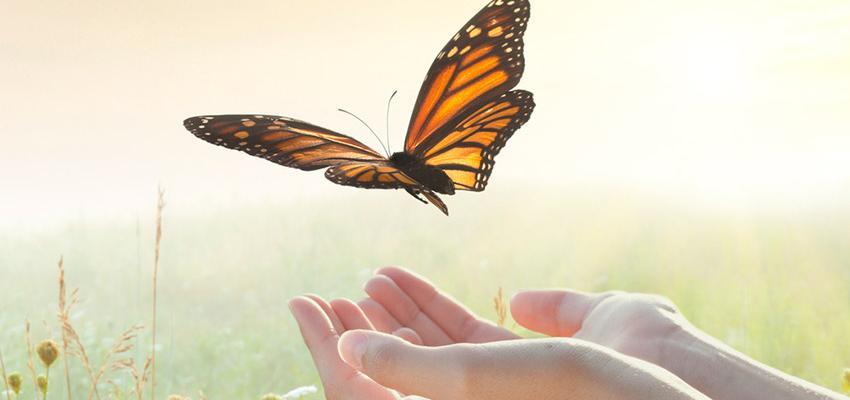 Symbolique des papillons : les messagers de l'univers venus pour vous guider