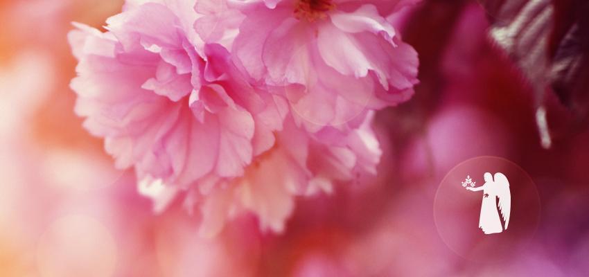Tout savoir sur les plantes et astrologie de vierge - Wemystic b4c9d01a464e
