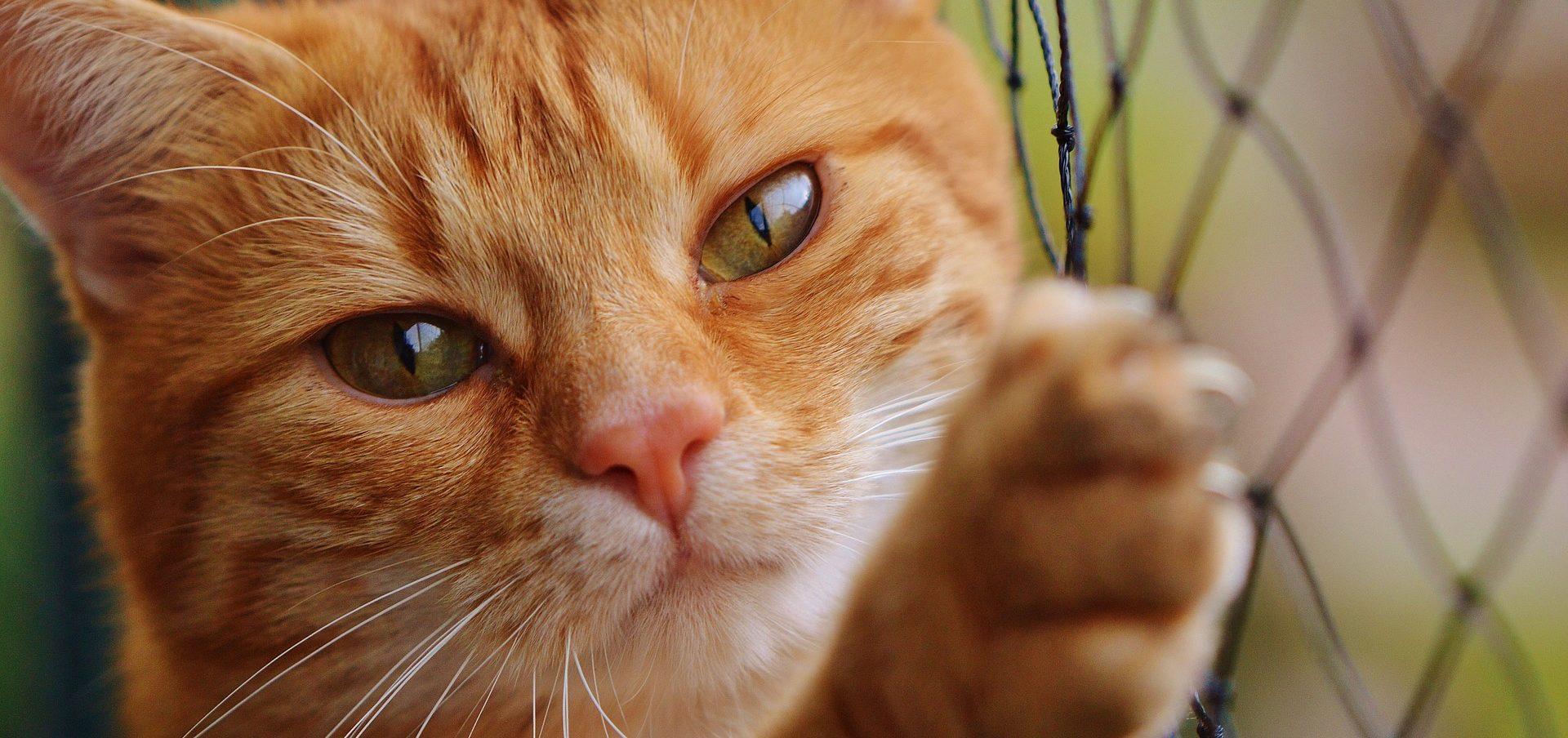 Yeux des chats signification galerie tatouage - Symbolique du chat ...
