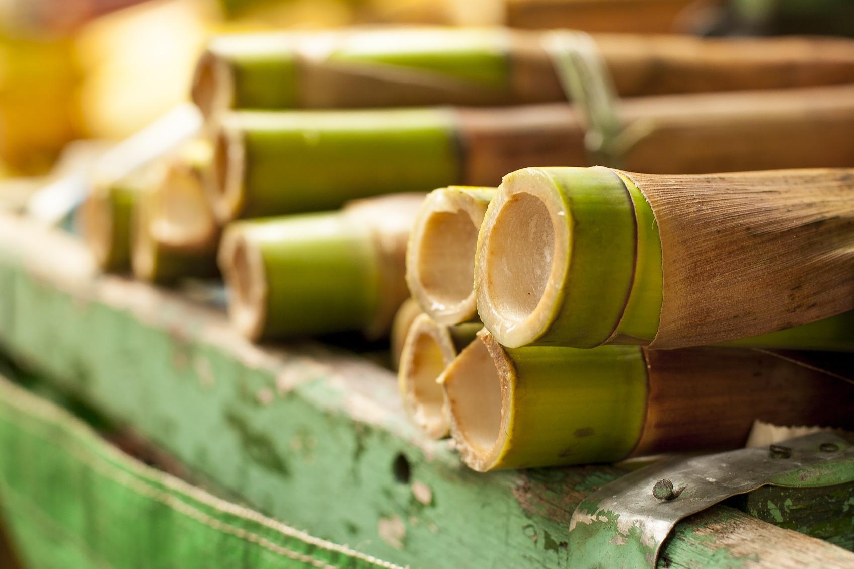 bambou porte bonheur une plante qui attire de bonnes. Black Bedroom Furniture Sets. Home Design Ideas