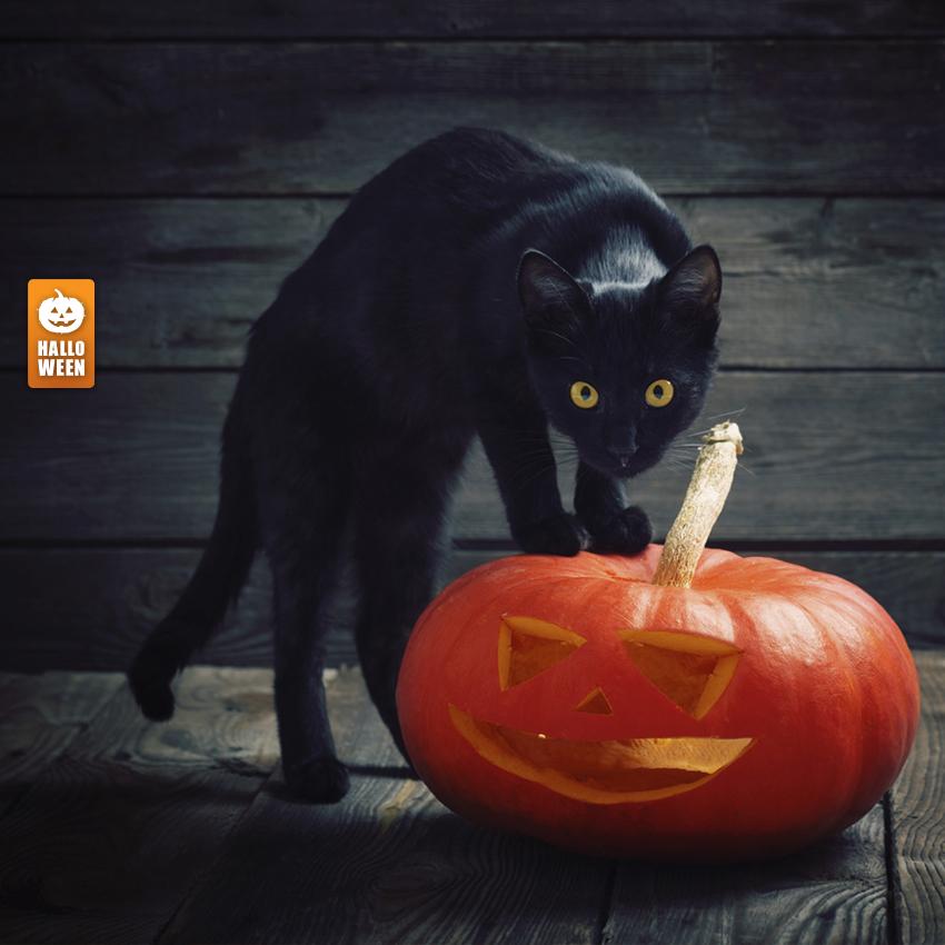 pourquoi le chat noir est un symbole de l halloween. Black Bedroom Furniture Sets. Home Design Ideas