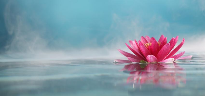 Signification de la fleur de lotus - Fleur de lotus bouddhisme ...