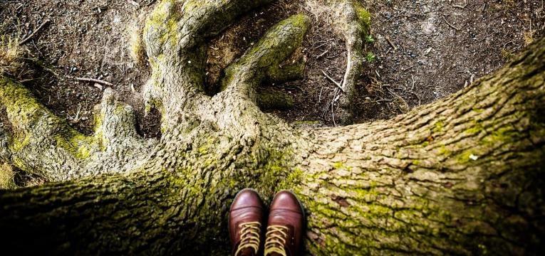 l'arbre de vie et la Kabbale