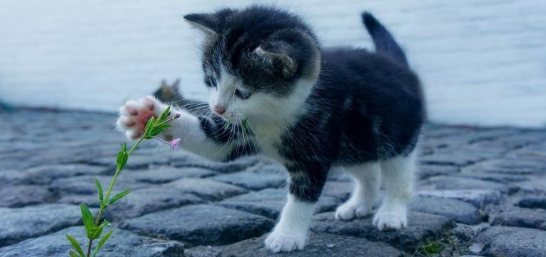 fleur de Bach pour chat