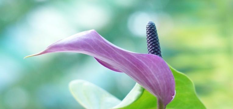 plantes et cristaux qui améliorent nos relations selon le Feng Shui