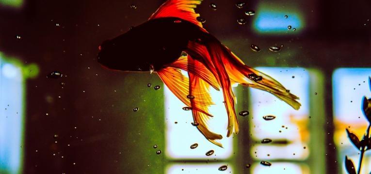 aquarium en feng shui