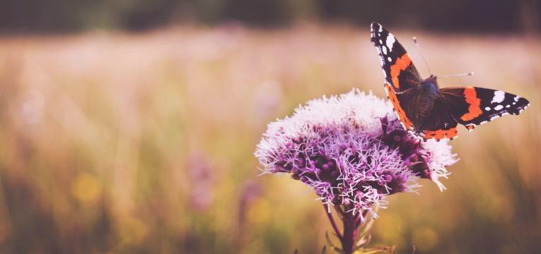 symbolique des papillons