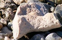 pierres de lithothérapie Corail