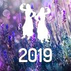 PRÉDICTIONS GÉMEAUX - horoscope 2019 gratuit