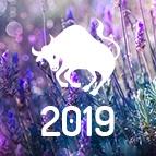 PRÉDICTIONS TAUREAU - horoscope 2019 gratuit