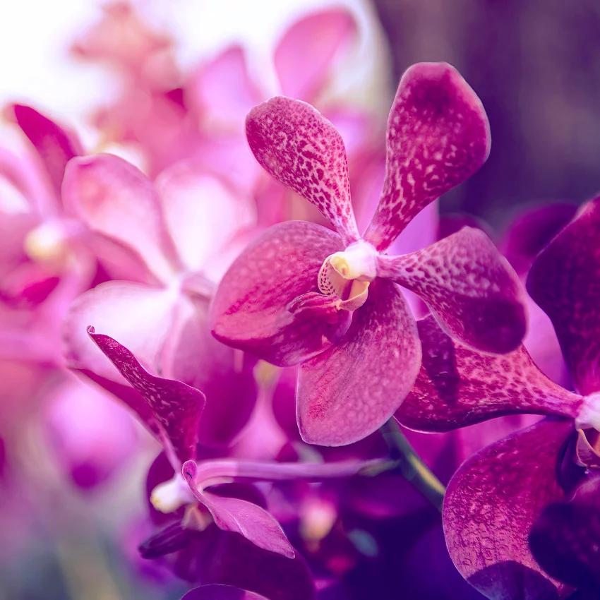 Horoscope des fleurs TAUREAU