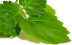huiles essentielles contre les hémorroïdes